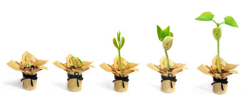 2_seed_growing